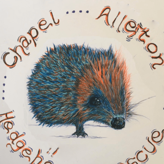 Chapel Allerton Hedgehog Rescue
