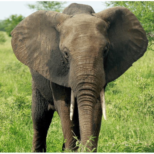 Operation Wallacea South-Africa 2019 -  Maddie Duffield