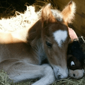Shires Holt Horse Sanctuary