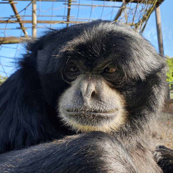 LEAF Foundation - Monkey Haven