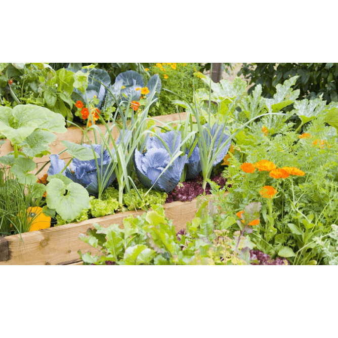 Osbaldwick Primary Kitchen Garden And Forest School
