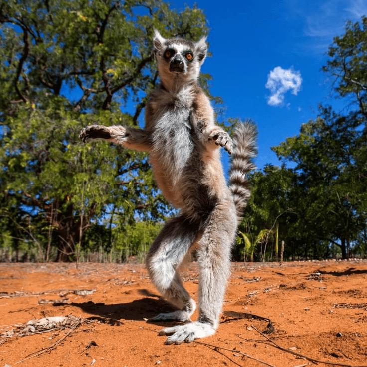 World Challenge Madagascar 2019 - Libbie Wilkinson