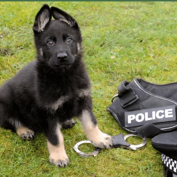 Scottish Police Dog Memorial