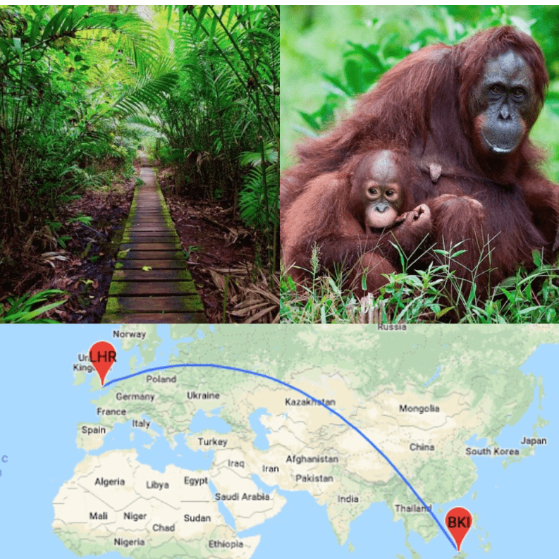 Borneo 2020 - Isobel Bracken