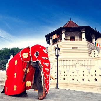 World Challenge Sri Lanka 2019 - Alex MacBean