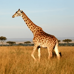 Camps International Kenya 2021 - Beth Gibbons