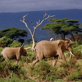 Kenya 2018 - Sophie Doherty