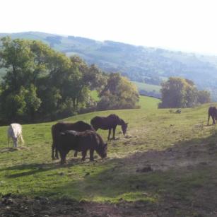 Positive Herd Project