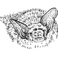 Somerset Bat Group