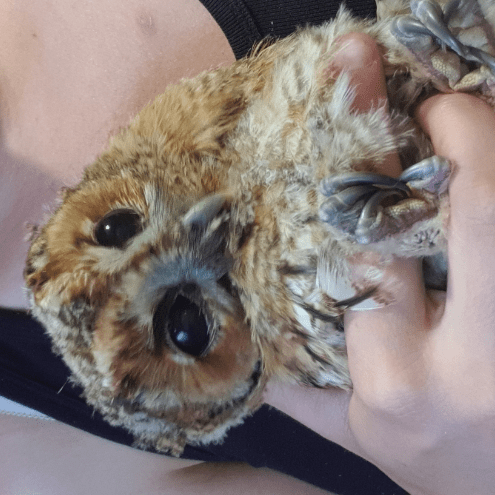 RWR Runham Wildlife Rescue