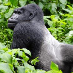East African Playgrounds Uganda 2018 - Sarah Mcgaw