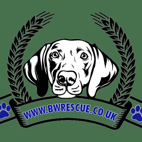 Blue Weimaraner Rescue & Rehoming UK