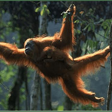 World Challenge Borneo 2019 - Lara Pyves