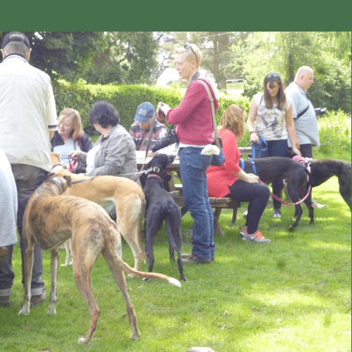 Wimbledon Retired Greyhounds
