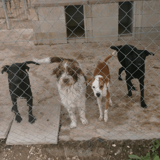 A New Day Dog Rescue - Spain