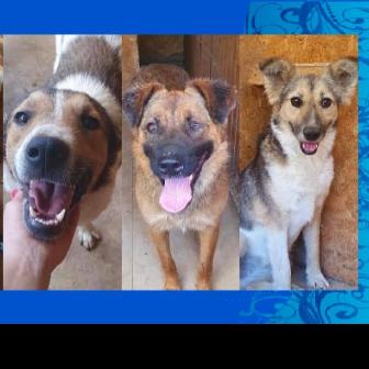 Helping Dogs in Romania
