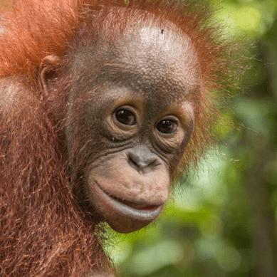 Camps International Borneo 2020- Maddie Cory