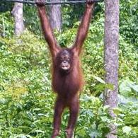 Borneo 2021 - Charlotte Darton