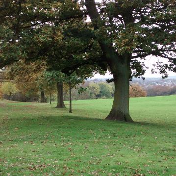 Friends of Graves Park