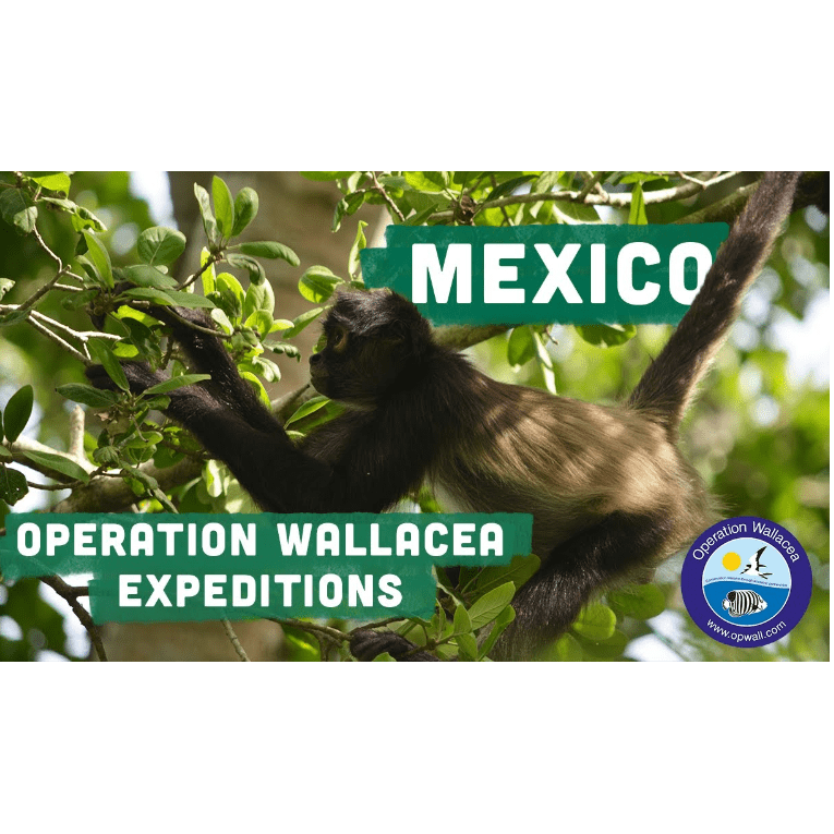 Operation Wallacea Mexico 2021 - Harry Southern