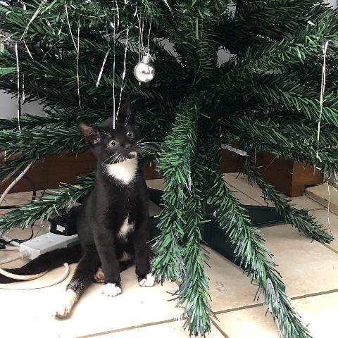 Help Hugo the paralysed kitten - Chloe Freeman