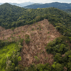 Operation Wallacea Honduras 2020 - Tom Vos