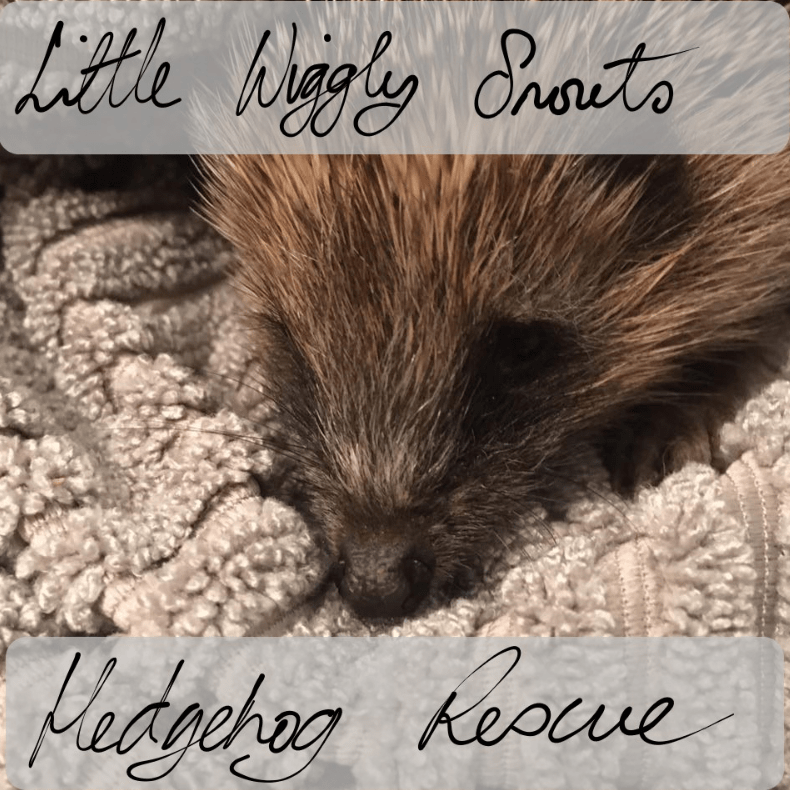 Little Wiggly Snouts Hedgehog Rescue