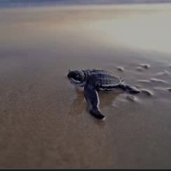 PMGY Sri Lanka  2020 - Victoria Duffield