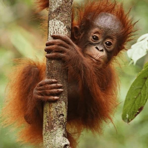 World Challenge Borneo 2020 -  Owen Parry