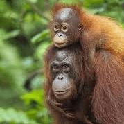 Borneo 2019 - Matthew Goodwin