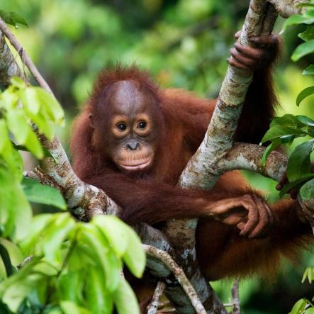 Camps International Borneo 2021 - Madison Pigott