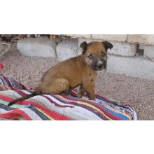 Help Dahab Dogs