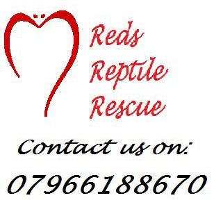 Reds Reptile Rescue