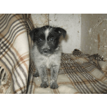 Save The Death Camp Dogs - Romanian Woofers Need You