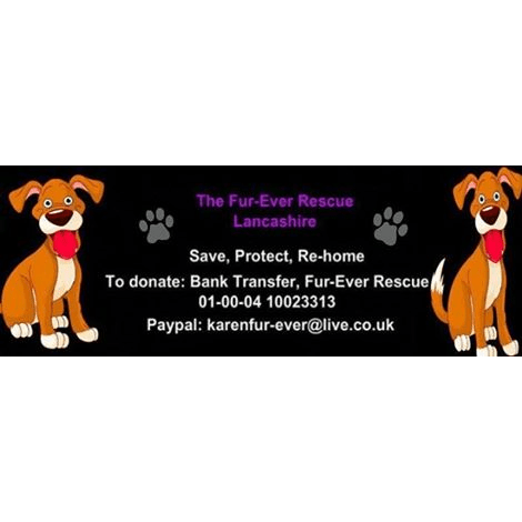 Fur-Ever Rescue