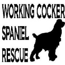 Working Cocker Spaniel Rescue