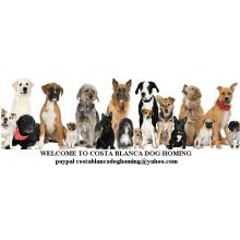 Costa Blanca Dog Homing