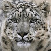 Deaf Leopards Foundation