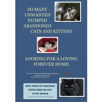 Croft House Cat Sanctuary
