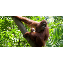 Camps International Borneo 2015 - Charlie Allen