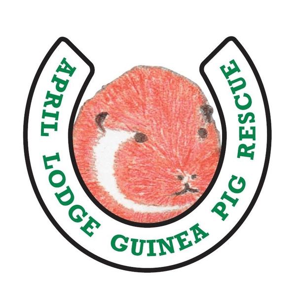 April Lodge Guinea Pig Rescue
