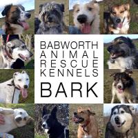 Babworth Animal Rescue Kennels - BARK