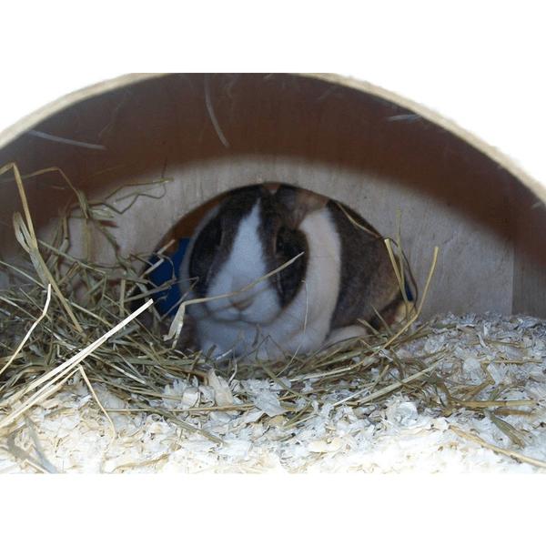 Yorkshire's Rabbit Retreat