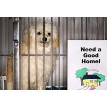 Homeless Pets Shelter