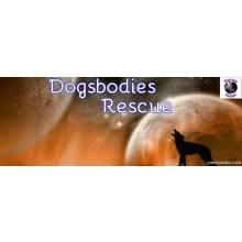Dogsbodies Rescue