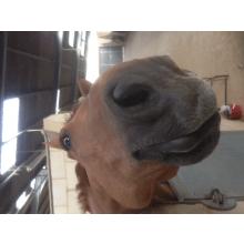 Chelwood Equestrian Training Centre - Help Eno