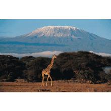World Challenge Tanzania 2015 - Holly Davis