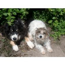 Cottage Farm Dog Rescue