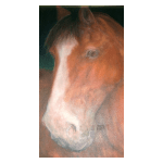 White Horse Stables - Horse Rescue