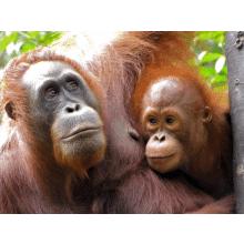 Borneo 2016 - Joe Salf